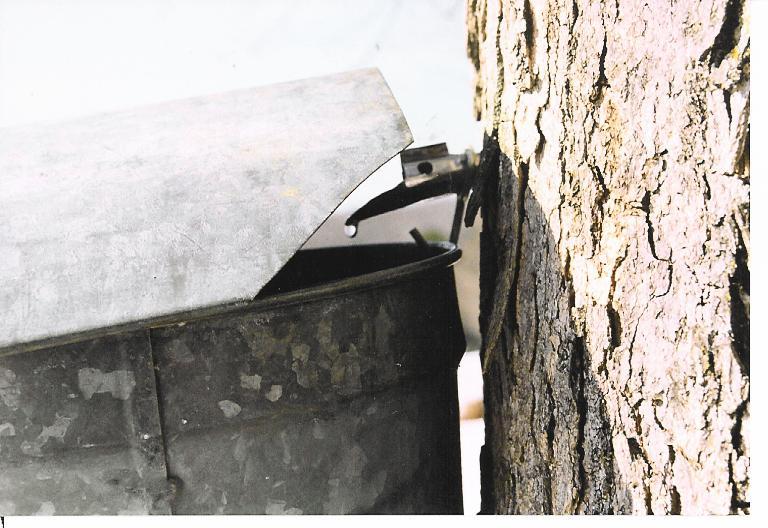 sap-bucket1.jpg